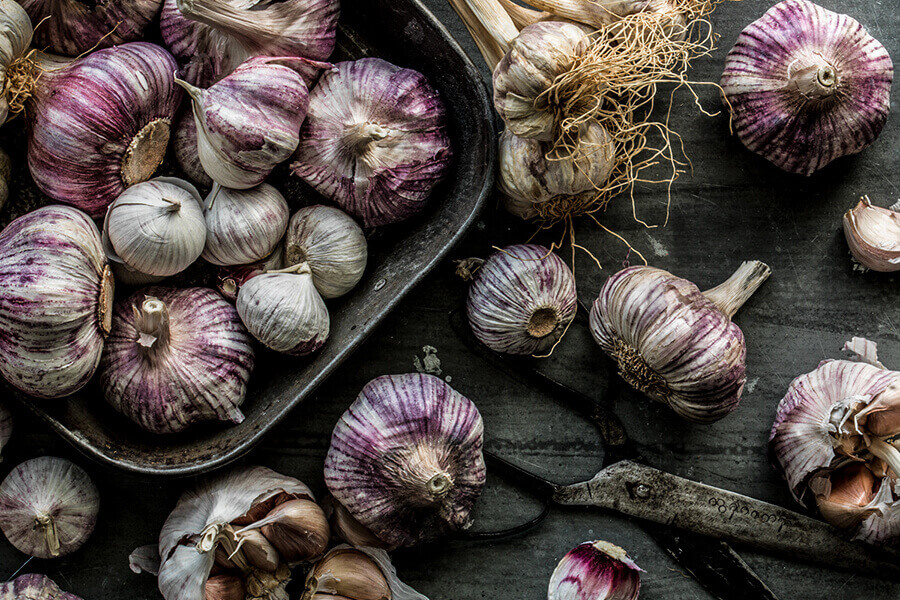 We have seven different types of garlic to pick from